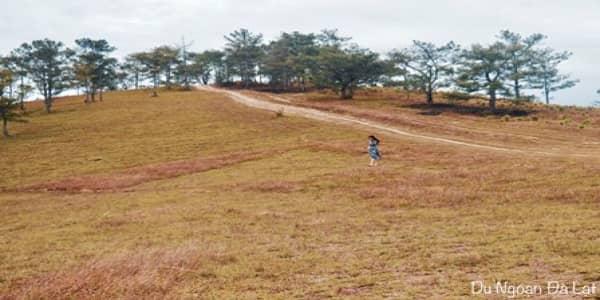 Phát hiện thêm một đồi thông cực đẹp tại Đà Lạt